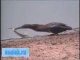 Птица ловит рыбу на хлеб